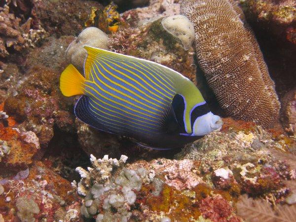 impressing underwater world ///// beeindruckende Unterwasserwelt