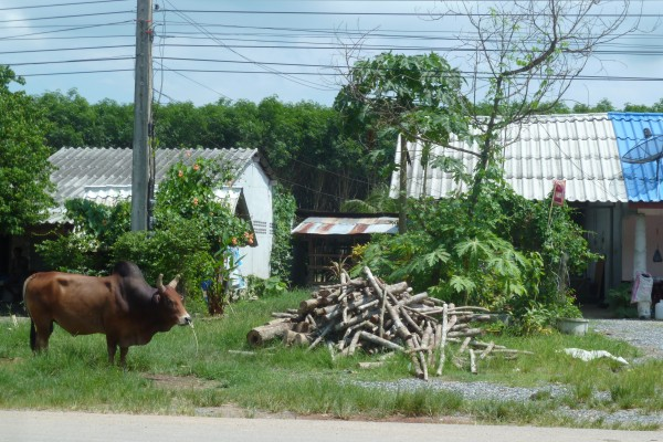 ländliches Thailand, rural Thailand (Trang - Thungyao)