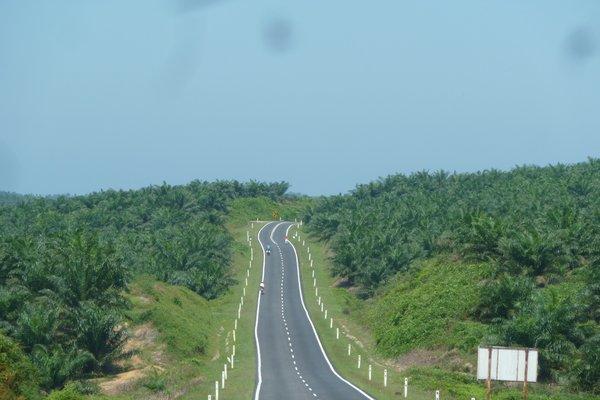 Malaysien hat sooo viele Palmölplantagen ///// Malaysia has sooo many palm oil plantations