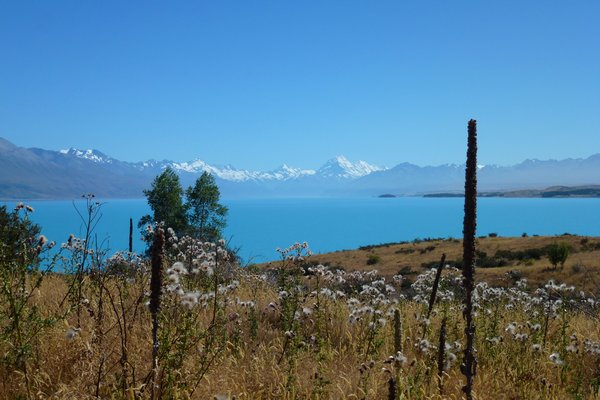 Lake Pukaki - unbelievably turquoise Lake Pukaki - view from the cycle trail along the shore. ///// Der unglaublich türkise Pukaki See - Sicht vom Radweg entlang des Ufers.