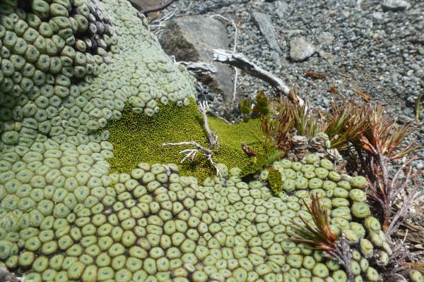 interesting plants along the hike ///// interessante Pflanzen entlang der Wanderung