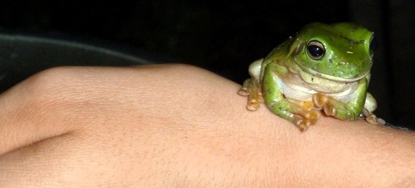 A frog sits on Jana's arm as well in the garden, the second night over dinner ///// Ein Frosch kommt auch vorbei uns sitzt friedlich auf Janas Arm, ebenfalls am zweiten Abend während des Abendessens
