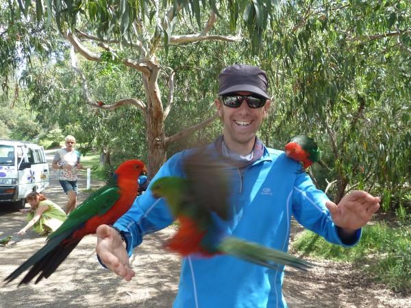 Parrots (Papageien)